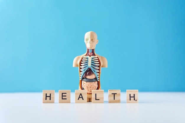 Manichino di anatomia umana con organi interni e parola salute su uno sfondo blu.