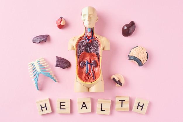 Manichino di anatomia umana con organi interni e parola salute su uno sfondo rosa. concetto di salute medica