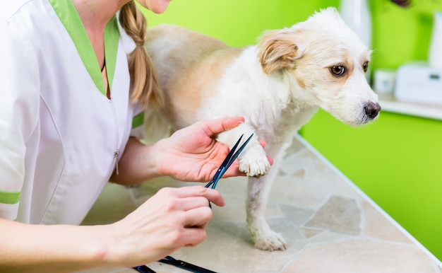 Manicure per cane nel salone di toelettatura per animali domestici
