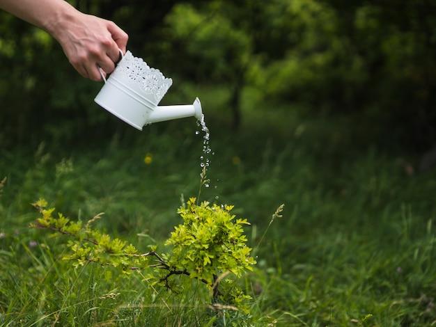 Mano che innaffia la pianta da annaffiatoio bianco