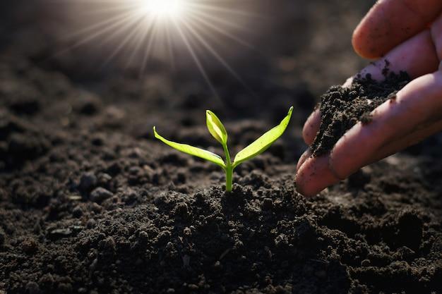 Mano che pianta germoglio in giardino con il sole