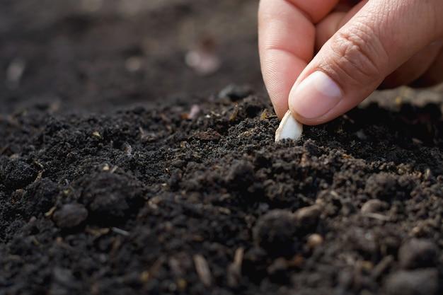 Mano che pianta il seme di zucca nell'orto