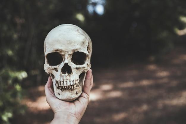 Mano che tiene il cranio nella foresta