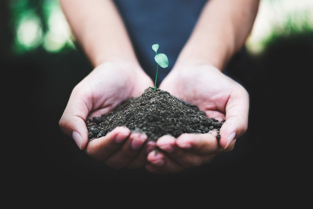 Mano che tiene il germoglio per la crescita della natura, la natura e il concetto di cura