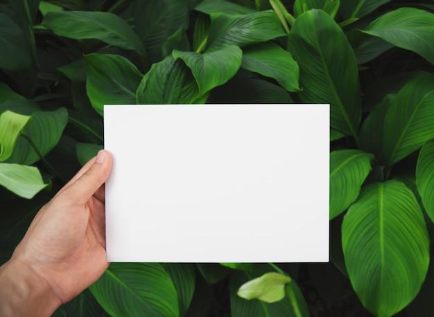 Mano che tiene il libro bianco sulla foglia verde