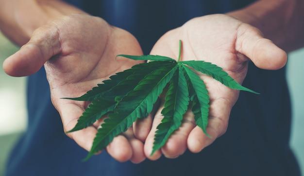 Mano che tiene la foglia di marijuana