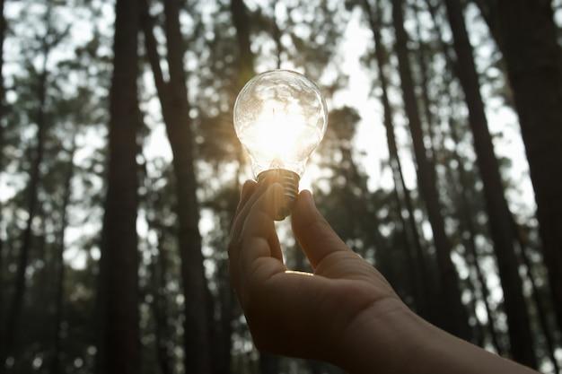 Mano che tiene la lampadina con la luce del sole nella foresta. energia solare, concetto di energia pulita