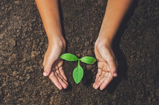 Mano che tiene la pianta giovane per piantare nel concetto di suolo mondo verde