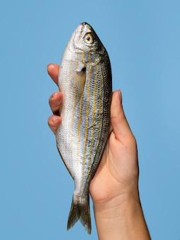 Mano che tiene pesce fresco con il primo piano