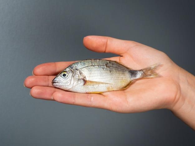 Mano che tiene piccolo pesce fresco