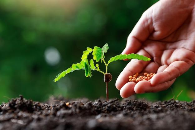 Mano del coltivatore che coltiva le giovani piante del bambino