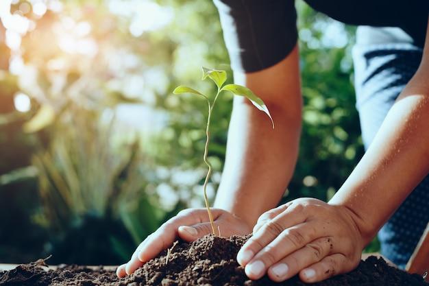 Mano del coltivatore che pianta albero nel gardren per il mondo di risparmi