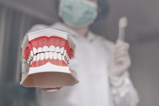 Mano del dentista per tenere un modello di dente e uno spazzolino da denti, dimostrazione di igiene orale