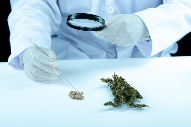Mano del dottore tenere e offrire al paziente marijuana medica e olio.