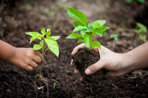 Mano del genitore e del bambino che pianta giovane albero su suolo nero insieme come risparmi il concetto del mondo