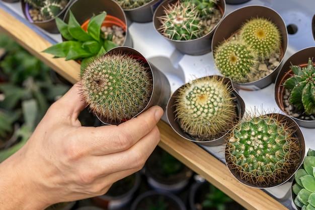 Mano del primo piano che tiene la piccola pianta del cactus