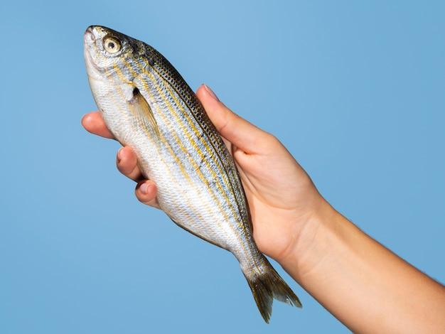 Mano del primo piano che tiene pesce crudo