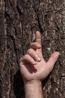 Mano dell'uomo sul tronco d'albero, in un gesto simbolico di clemenza e protezione, nei confronti della natura