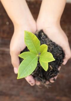 Mano della donna che tiene una piccola pianta verde dell'albero