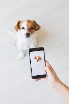 Mano della donna con lo smart phone mobile che prende una foto di piccolo cane sveglio sopra bianco