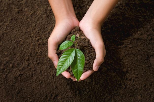 Mano di vista superiore che tiene giovane albero per la piantatura nel giardino