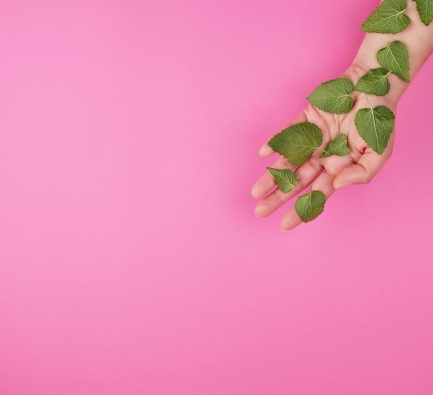 Mano femminile e foglie verdi