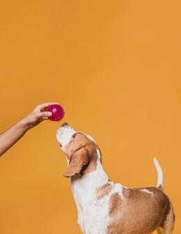 Mano offrendo una palla di gomma ad un cane