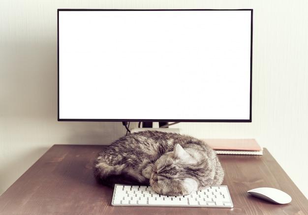 Mantieni la calma e rimani a casa. il gatto lanuginoso dorme sul desktop accanto al computer.