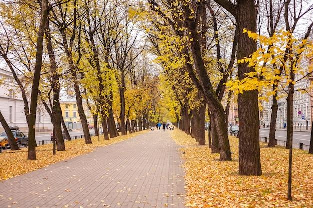 Marciapiede attraverso il vicolo di alberi autunnali con foglie gialle