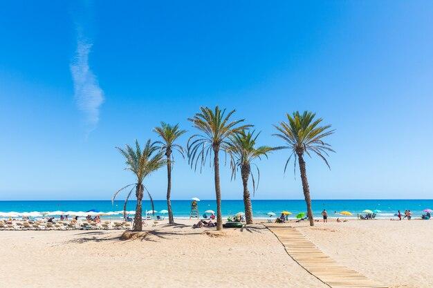 Mare ad alicante, con palme sulla spiaggia