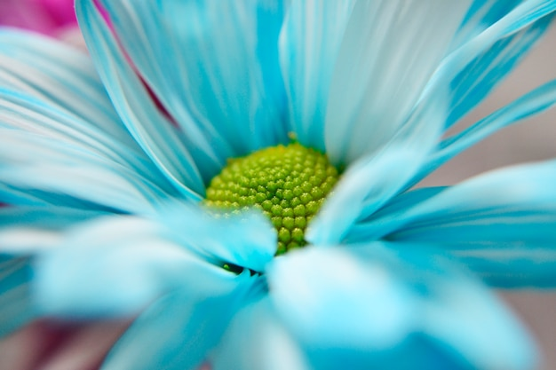 Margherita blu