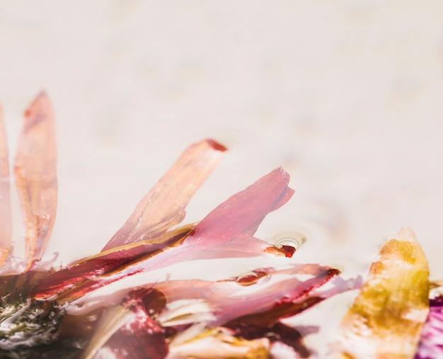Margherite bagnate da vicino