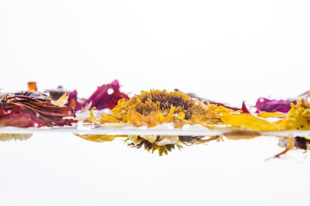 Margherite colorate bagnate su sfondo bianco