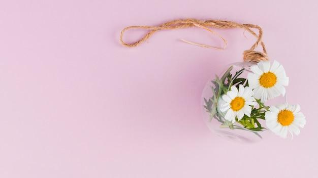 Margherite di vista superiore in un vaso