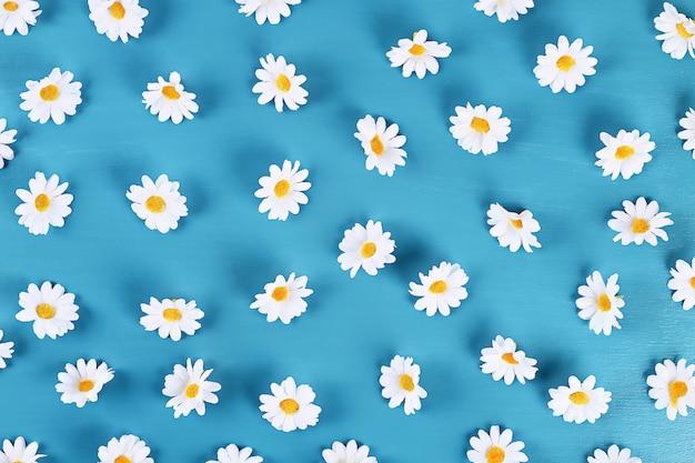 Margherite su sfondo blu. vista dall'alto. sfondo estivo