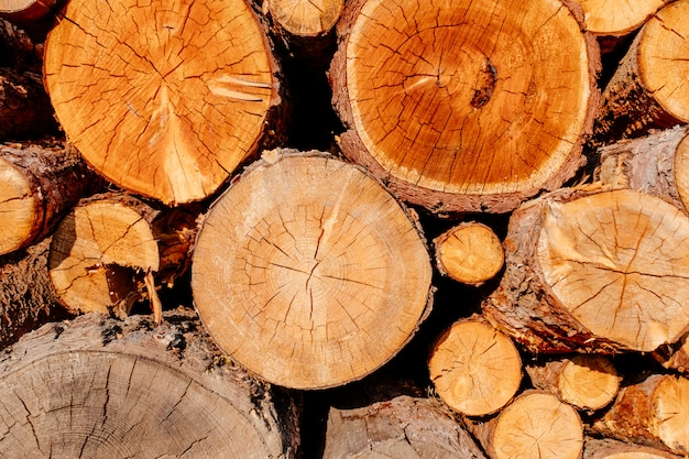 Marrone giallo di legno della sezione dell'albero dei ceppi dell'incrocio della fetta del primo piano