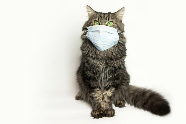 Maschera medica per gatto protetto da virus gatto a casa