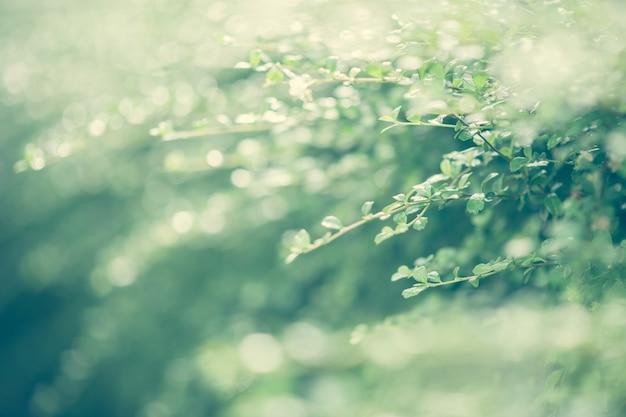 Masum. foglia verde fresca su sfondo sfocato verde