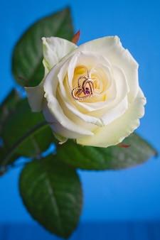 Matrimonio e rose rosa bianche