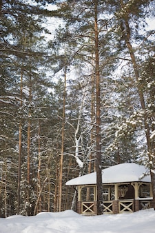 Mattina gelida in un bosco di abeti
