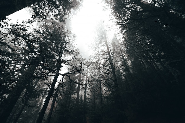 Mattina nebbiosa in una foresta