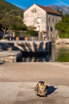 Mattina nella baia di kotor. gatto sulla baia di kotor. montenegro.