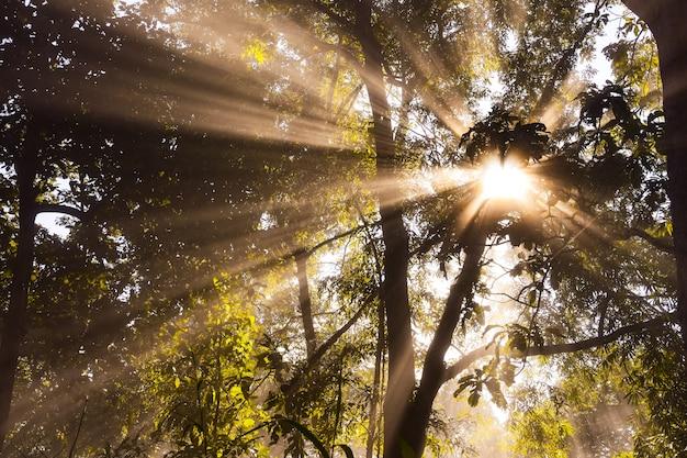 Mattina tramonto nebbioso nella foresta