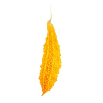 Maturo di cetriolo amaro giallo o zucca amara. colpo dello studio isolato su bianco