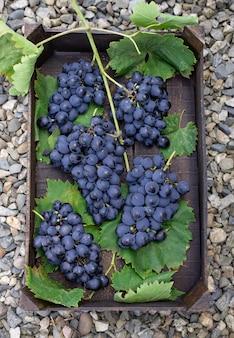 Mazzi di uva blu in una scatola di legno nel giardino