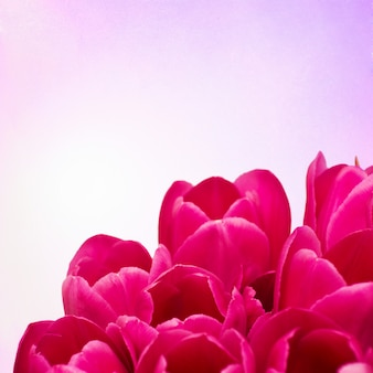 Mazzo dai fiori dei tulipani su retro fondo