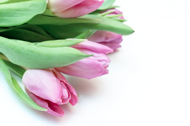 Mazzo dei fiori della molla, tulipani rosa su fondo bianco con lo spazio della copia