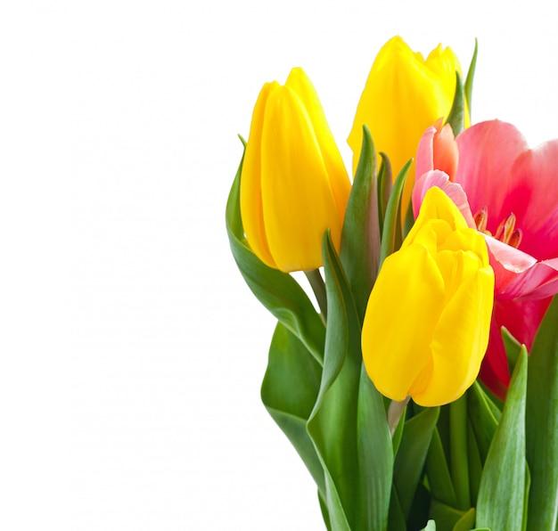 Mazzo dei tulipani su bianco