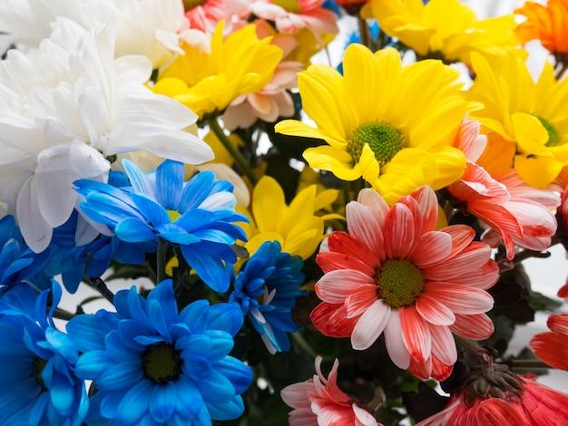 Mazzo di bei crisantemi multicolori in un vaso.