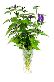 Mazzo di erbe aromatiche fresche con infiorescenze blu